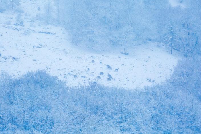 abruzzo cervi neve