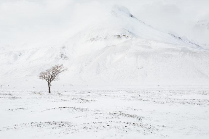 campo imperatore albero