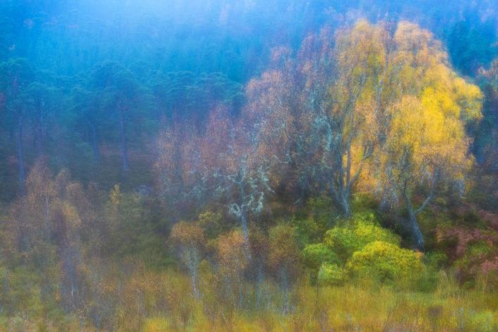 mistery autumn