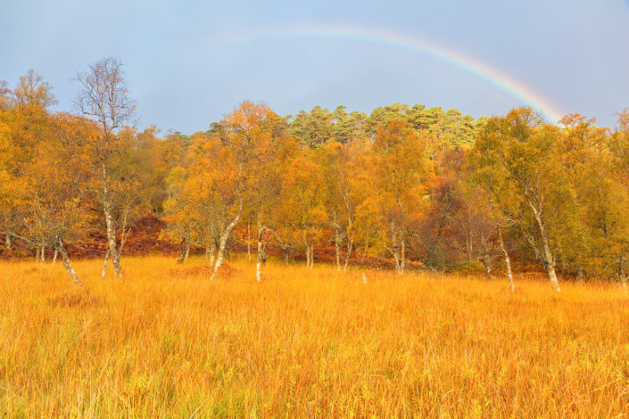 rainbow autumn